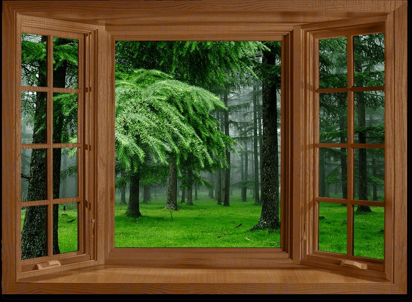 Окно дерево фото без установки